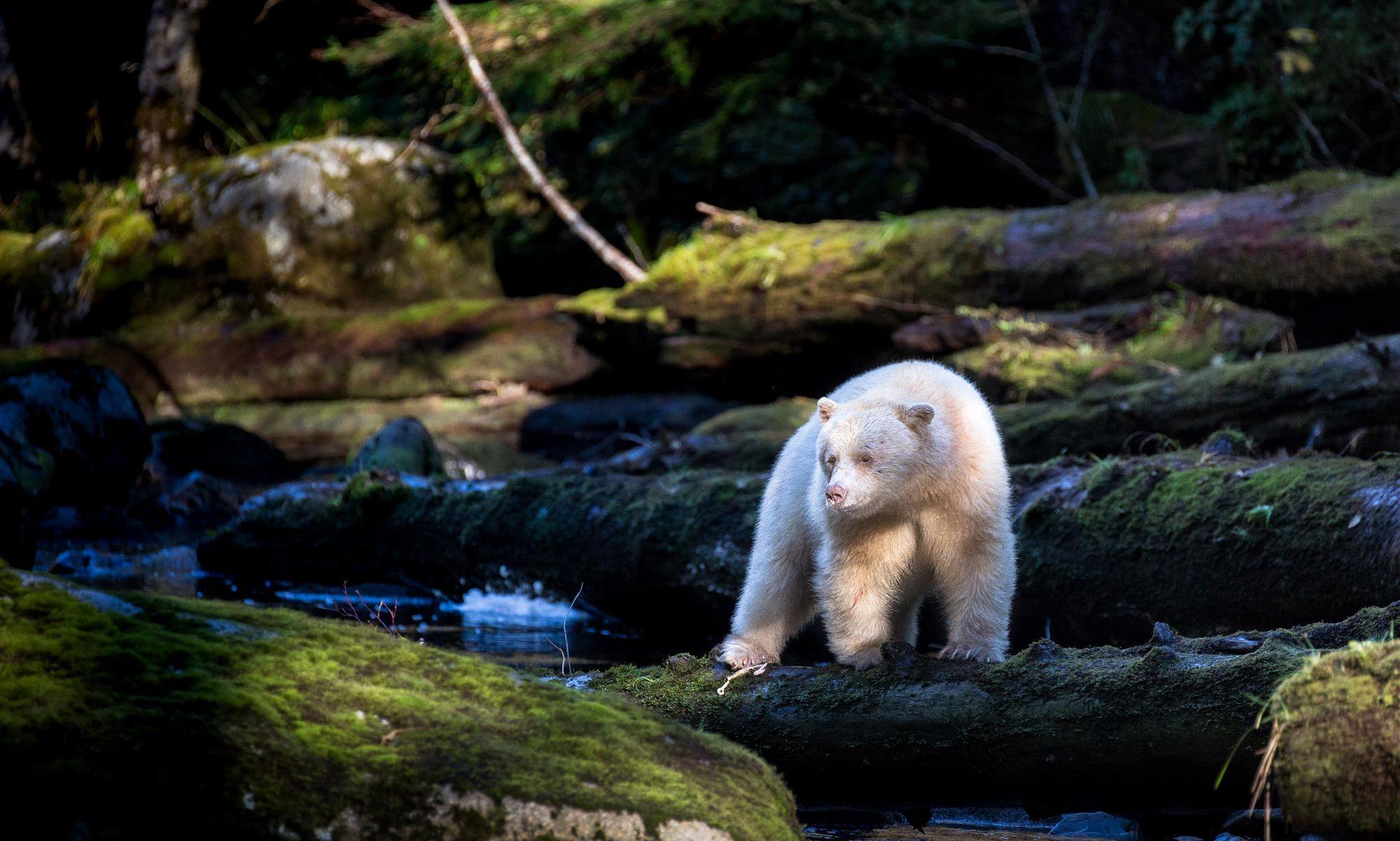 Wildlife Journeys